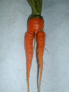 Latest Funny Pictures: Funny Carrot Pics