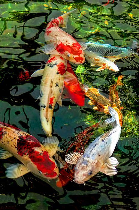 Colorful Japanese Koi Fish Shower Curtain for Sale by