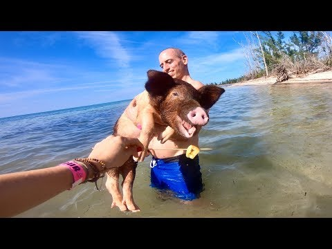 White Wolf : The Bahama island that is full of swimming