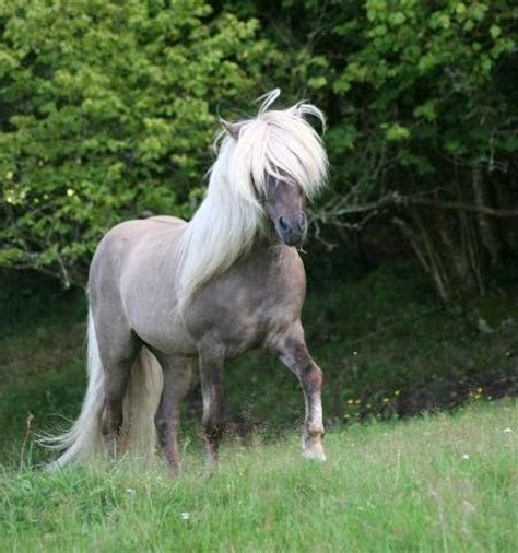 Top 15 Myths about Horses